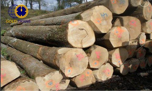 thủ tục nhập khẩu gỗ tần bì