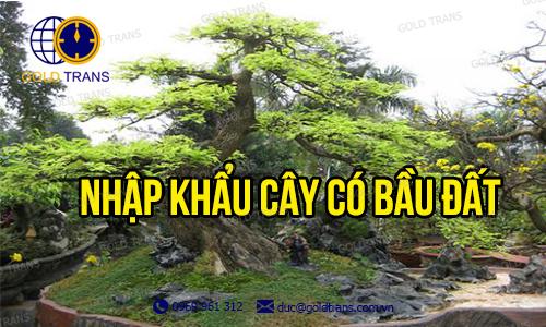thu-tuc-nhap-khau-cay-co-bau-dat