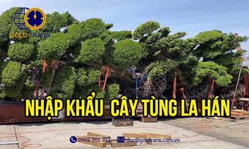 thu-tuc-nhap-khau-cay-tung-la-han